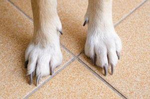 Crecimiento de uñas-como en los perros