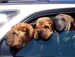 Signos y síntomas de la infección por levaduras canina