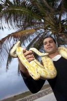 Enfermedades comunes dentro de las serpientes