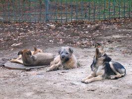 Tratamientos naturales para los puntos calientes para los perros