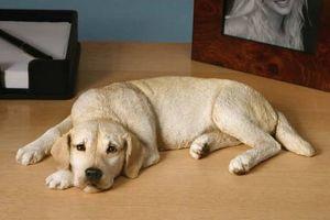 Medicamentos recetados caninos