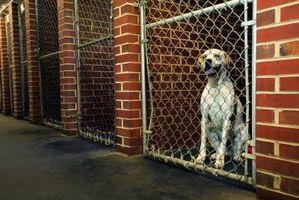 Cómo adoptar una mascota en Carolina del Sur