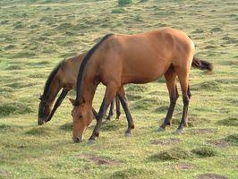 Los efectos del exceso de selenio en los caballos