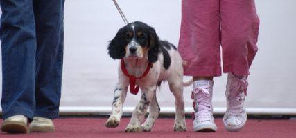 Etapas del cáncer canino