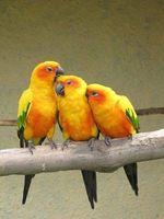 Los pájaros del amor de Información