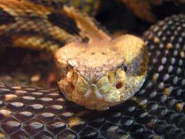 Sobre el cuidado de pieles de serpiente