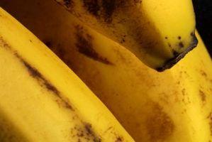 Cómo hacer chips de plátano con un deshidratador de alimentos