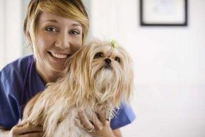 Efectos secundarios de la prednisona en los perros Sobredosis
