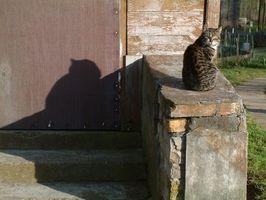 Cómo hacer que las casas del gato al aire libre