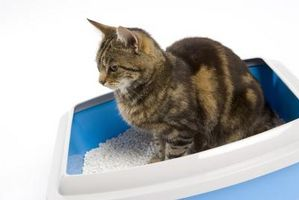 Cómo entrenar a un gato adulto de la caja de arena