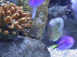 El uso de sales de Epsom en acuarios de peces