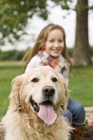 Los microchips en los perros pueden ser quitado?