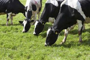 Guía del carnicero de la carne de vaca