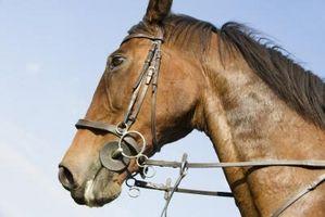 Cómo entrenar a un caballo de carreras