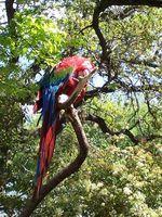 Cómo hacer una red de escalada del pájaro con el cáñamo de Manila