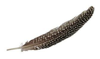 ¿Cuál es el cilindro central de una pluma de ave?