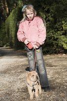 Instrucciones para el entrenamiento del perro con una correa