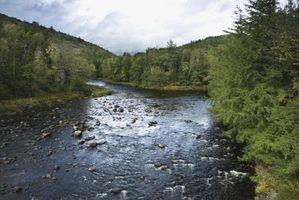 Lo que los pájaros vuelan en el verano en las montañas de Adirondack?