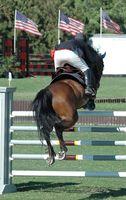 Cómo realizar la prueba para la artritis en los caballos