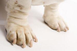 Datos biológicos sobre las almohadillas de las patas del perro