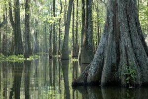 Cómo explorar Louisiana Bayous