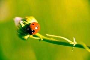 ¿Qué órganos se utilizan en el sistema respiratorio de los insectos