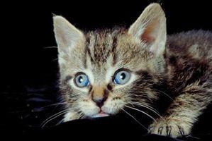 Cómo encontrar a su gatito en sus escondrijos