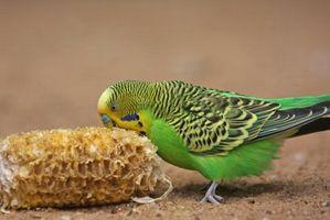 Cómo Clip uñas de los pies de un periquito