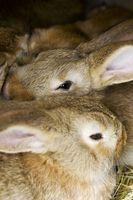 Cómo alimentar a los conejos de carne heno