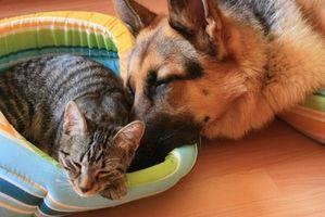 Canina y felina Análisis de orina