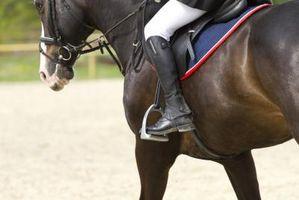 La formación de espuma de la boca de los caballos