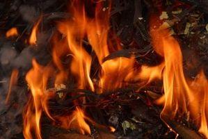 Como el humo de madera para el Prime Rib
