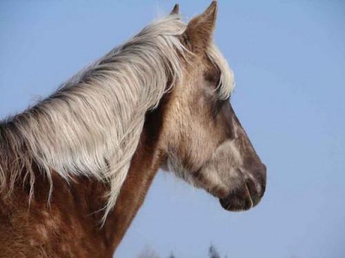 La infección sinusal caballo