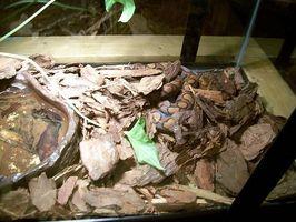 Acerca de serpiente terrarios