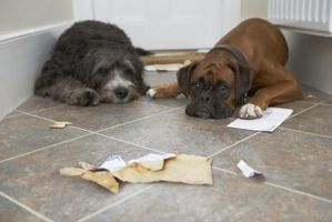 Aceite Mineral de obstrucción intestinal en los perros