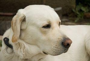 Las convulsiones fatales en los perros