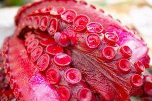 ¿Tiene que limpiar los tentáculos del pulpo antes de comerlos?