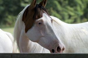 Acerca de caballos pintos