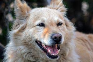 Tipos de dientes de perro