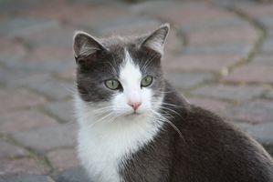 Comida para gatos con problemas renales
