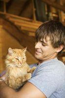 Planificación para el costo de tener un gato