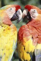 Cambio en Colores de la pluma de los loros