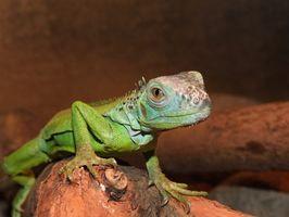 ¿Cuáles son las principales características de los reptiles?