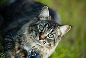Cómo obtener el aceite mineral Fuera de la piel de mi gato