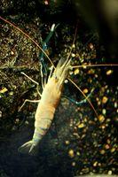 El hábitat natural del cangrejo de río