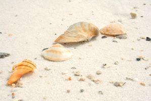 Casas de playa en Sarasota, Florida