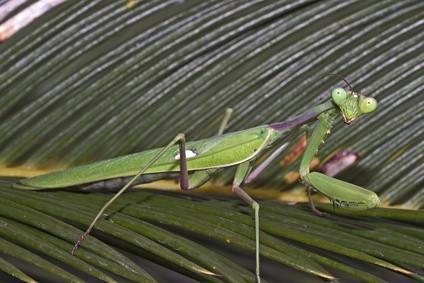 Bichos y los insectos en la selva tropical