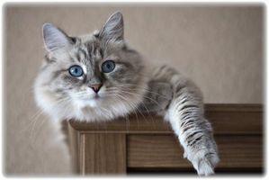 Cómo construir una torre de escalada del gato