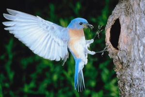 Las mejores casas de Bluebird