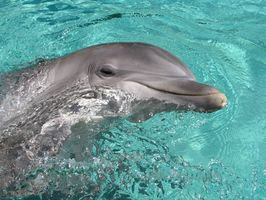 Dolphin Cruises en Jacksonville, Florida